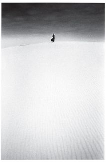 8e57bcebaa0974ab4454590c2adc7b21--jean-loup-sieff-lonely